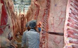牛枝肉の格付